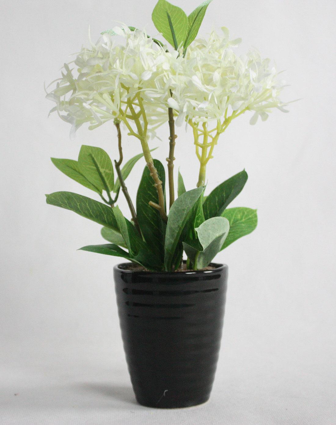 花植物盆图片手绘